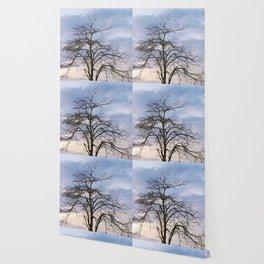 Majestic Old Tree Wallpaper