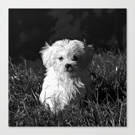 maltese dog vector art black white Canvas Print