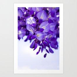 lilac wisteria Art Print
