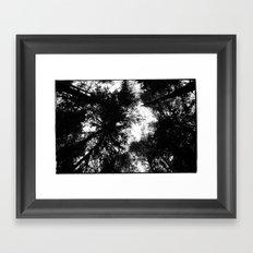NORWEGIAN FOREST II Framed Art Print
