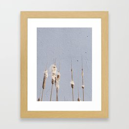 cat tails and concrete. odd. Framed Art Print