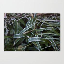 Gräs Canvas Print