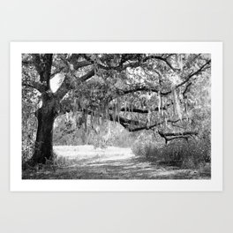 New Orleans Oak Tree Art Print