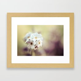 Cut through the Garden II Framed Art Print
