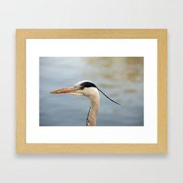A head shot of a Grey Heron - Herons - in profile. Framed Art Print