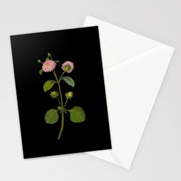 Lantana Involucrata Mary Delany Delicate Paper Flower Collage Black Background Floral Botanical Stationery Cards