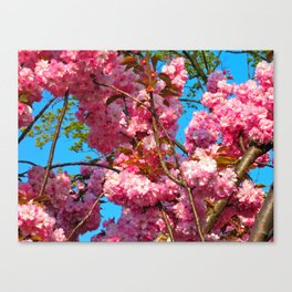 Prague Spring #2 Canvas Print