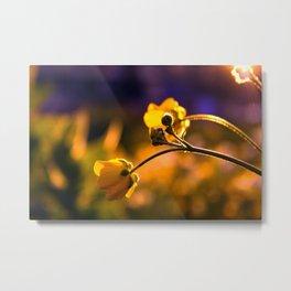 A Wild Flower Sunset Metal Print