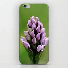 Common Spotted Orchid iPhone & iPod Skin