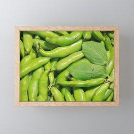 Fava bean pods Framed Mini Art Print