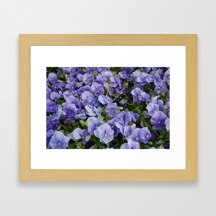 Pansy flower Framed Art Print