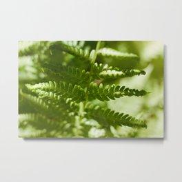 Fern Photography Print Metal Print