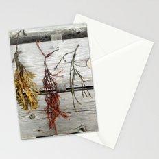 Deer Isle Seaweed  Stationery Cards