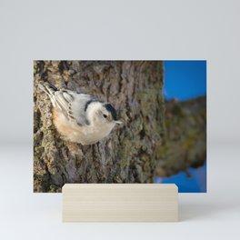 Nuthatch: The Acrobat Mini Art Print