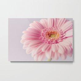 Pretty Pastel Gerbera  Metal Print