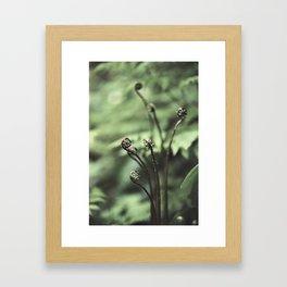 Fiddler Framed Art Print