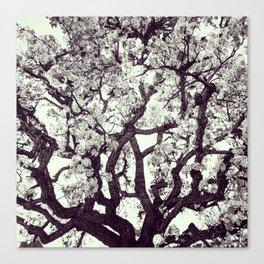 White Tree Blossom Canvas Print