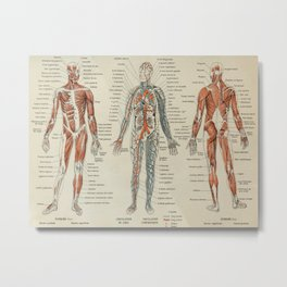 Anatomy Vintage Scientific Illustration French Language Encyclopedia Lithographs Educational Metal Print