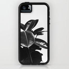 Black Ficus Elastica iPhone Case