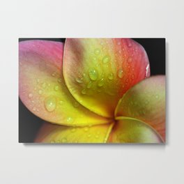 Morning Due in the Tropics Metal Print