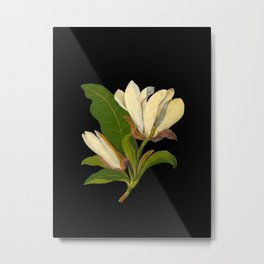Magnolia Tripetala Mary Delany Delicate Paper Flower Collage Black Background Floral Botanical Metal Print