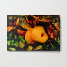 Crispy Fall Apples - Living Still Life Metal Print