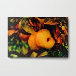 Crispy Fall Apples - Living Still Life Metal Print