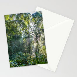 Sun Rays in a Forest Stationery Cards