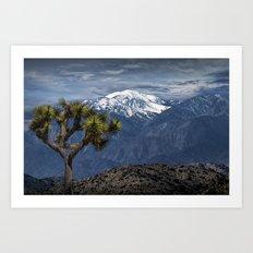 Joshua Tree at Keys View in Joshua Park National Park viewing the Little San Bernardino Mountains Art Print