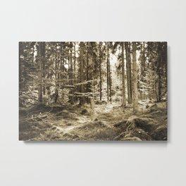 Quiet Forest II Metal Print