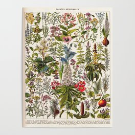 Adolphe Millot - Plantes Medicinales A - French vintage poster Poster