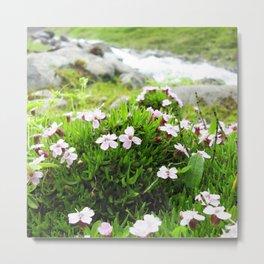 Watercolor Flower, Moss Campion 02, St Mary's Glacier, Colorado Metal Print