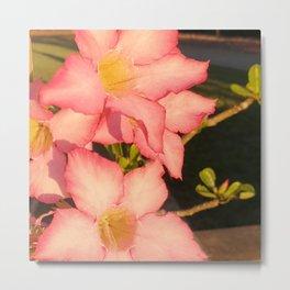Desert Rose Five Petal Flower - Adenium Obesum Metal Print