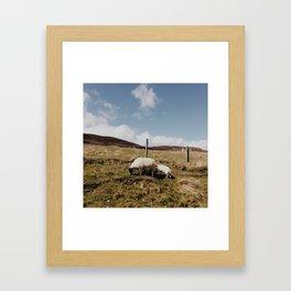 Scottish Sheep Framed Art Print