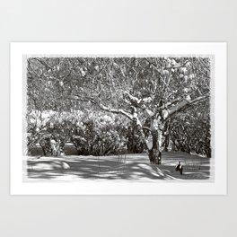 Snow Covered Birch Tree & Shadows Art Print