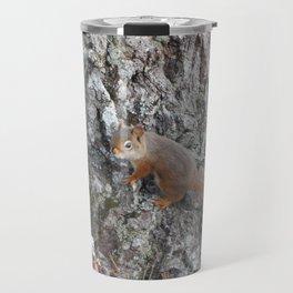 Acadia Squirrel Travel Mug