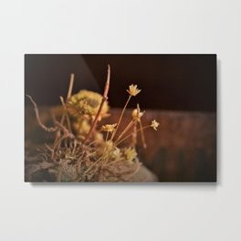 Straw Flower Metal Print