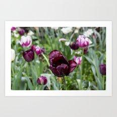 Dark Tulips Art Print
