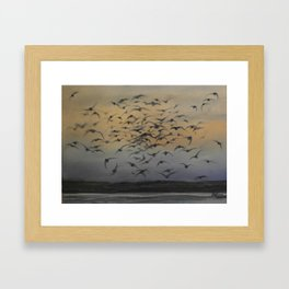 STARLINGS IN THE EVENING SKY Framed Art Print