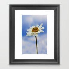 Daisy Daisy II Framed Art Print