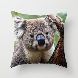 Koala 1218 Throw Pillow