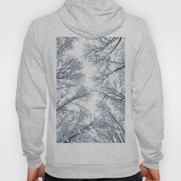 Snow covered top trees, Winter trees crown. Hoody