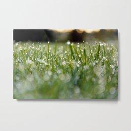 Dew Laden Grass 1 Metal Print