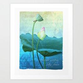 New Lotus Art Print