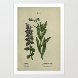 Flower Bugle Forget me not ajuga reptans myosotis palustris19 Art Print