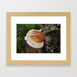 Reishi 1 Framed Art Print