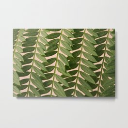 Jacaranda Leaves Metal Print