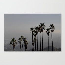 California | Palm Trees in Griffith Park Canvas Print