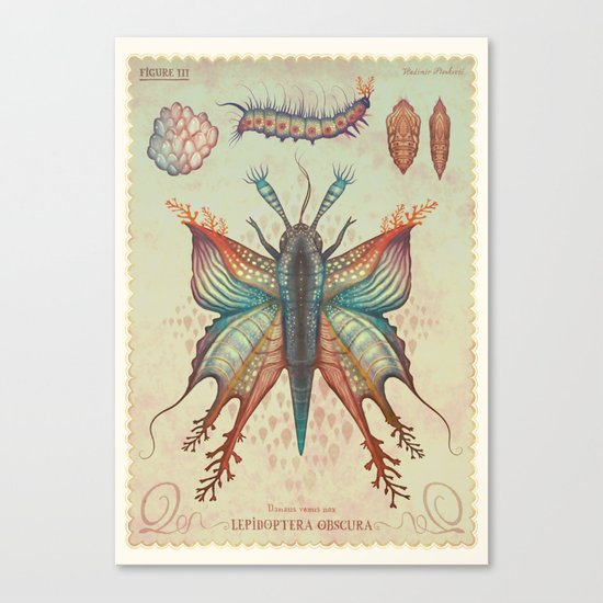 Danaus venus nox Canvas Print