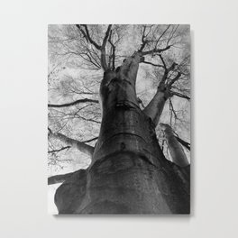 Silver Giant--Black and White Nature Photography Metal Print
